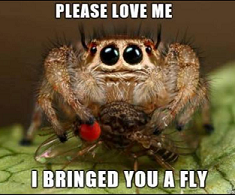 I bringed you a fly.png