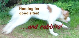 Hunting for good sites (dog chasing rabbit)