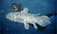 coelacanth3_halfsize.png
